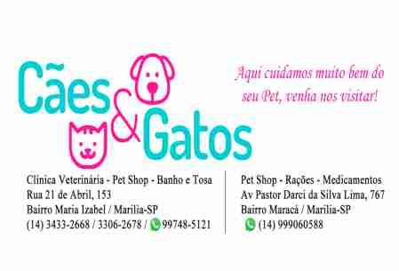 Pet Shop Cães & Gatos
